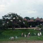 サファリパーク内のペリカンなどの鳥・トリ・とり