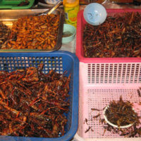 大量に売られている屋台の虫(食用)