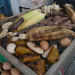 炭火でトウモロコシやサツマイモ、バナナを焼く