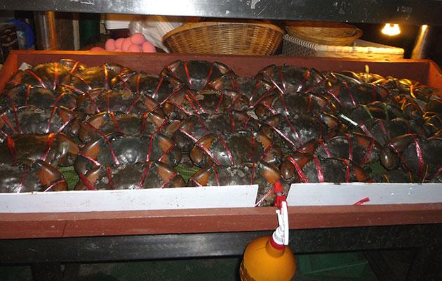 シーフードレストランのカニ・かに・蟹