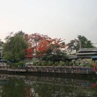 紅葉のような綺麗な葉を茂らせた木を植えた家