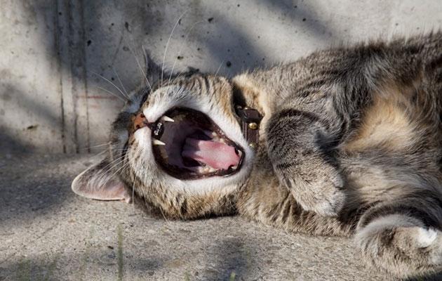 疲れてもいない早朝から「お疲れ様です!」と挨拶する日本人